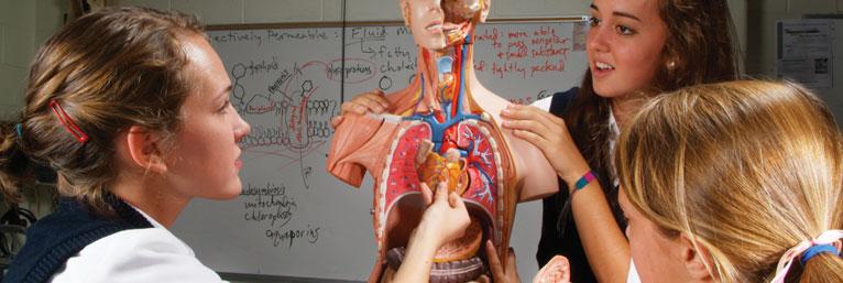 Anatomische Modelle | Anatomiemodelle | Menschliche Anatomie - 3B ...