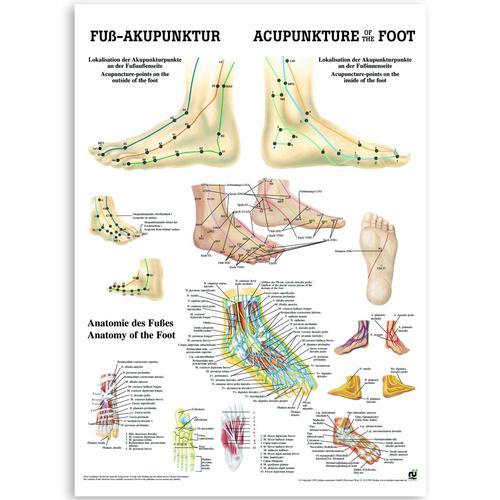 Lehrtafel Fußakupunktur, Papier, 50 x 70 cm, Deutsch & Englisch ...