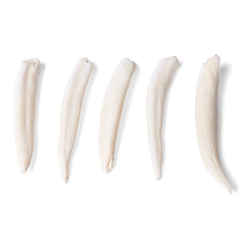 Zahntypen unterschiedlicher Säugetiere (Mammalia) - 1021044 ...