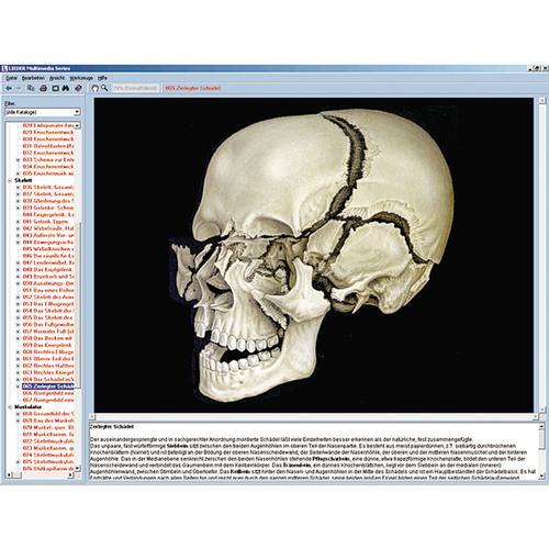 Skelett, Muskulatur und Bewegungsapparat des Menschen, Interaktive ...