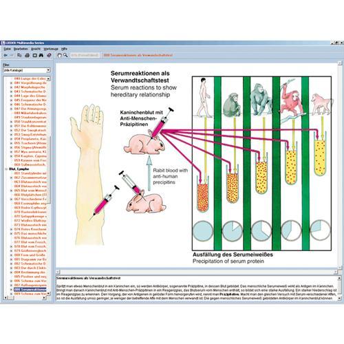 Atmung, Herz und Kreislauf des Menschen, Interaktive CD-ROM ...