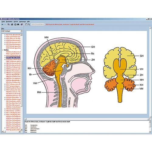 Nervensystem und Informationsübertragung Teil II, Interaktive CD-ROM ...