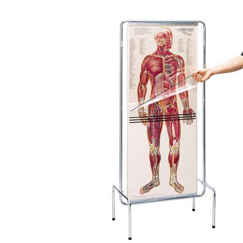 Der Menschlichen Anatomie Ist – Tintnwrap