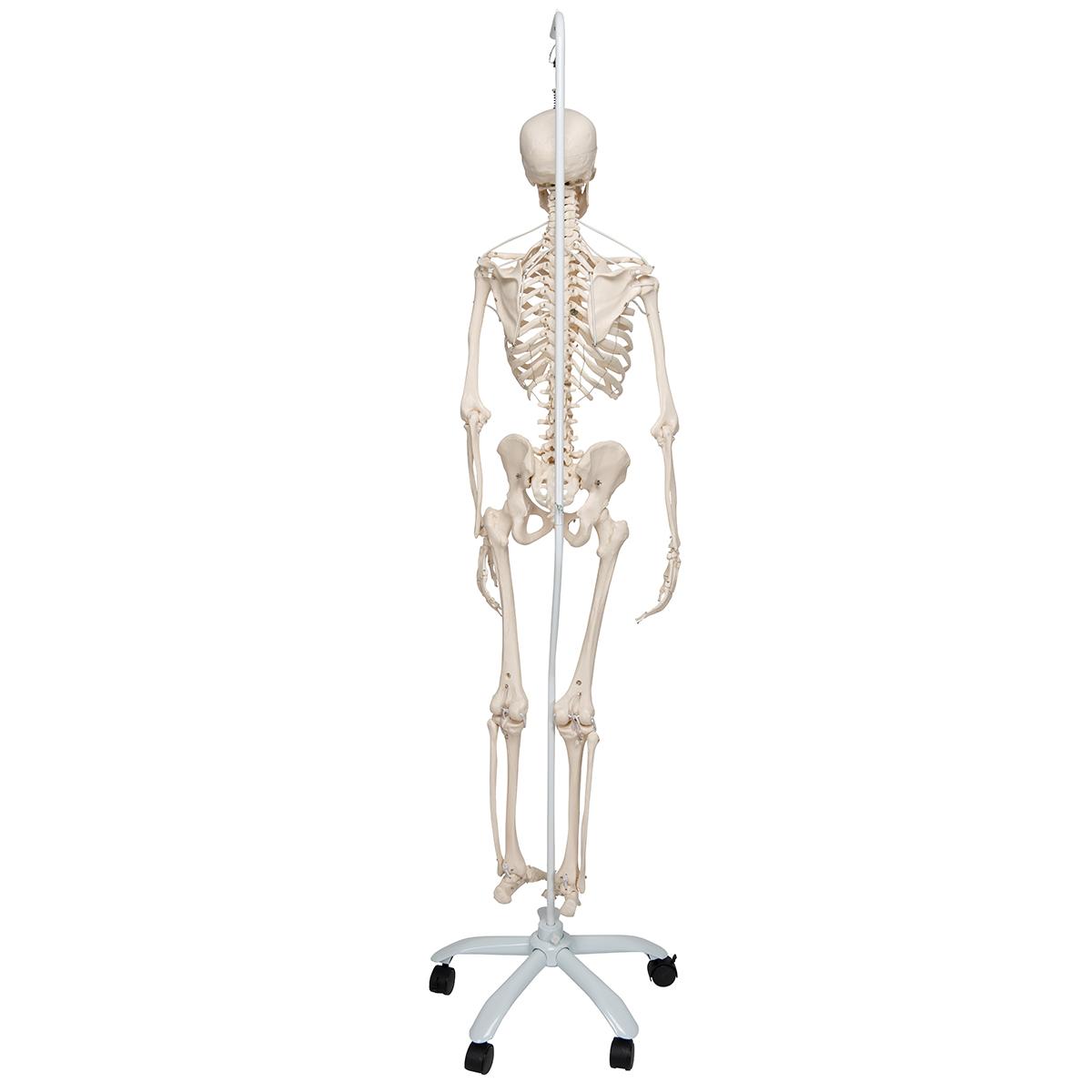 Atemberaubend Funktionelle Anatomie Und Kinesiologie Galerie ...