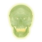 A20/N: Glow in the Dark Skull Model