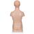 Mini Torso Modell, 12-teilig - 3B Smart Anatomy, 1000195 [B22], Torsomodelle (Small)
