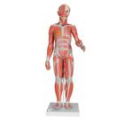 B56: 1/2 Life-Size Complete Female Muscular Figure, 21 part