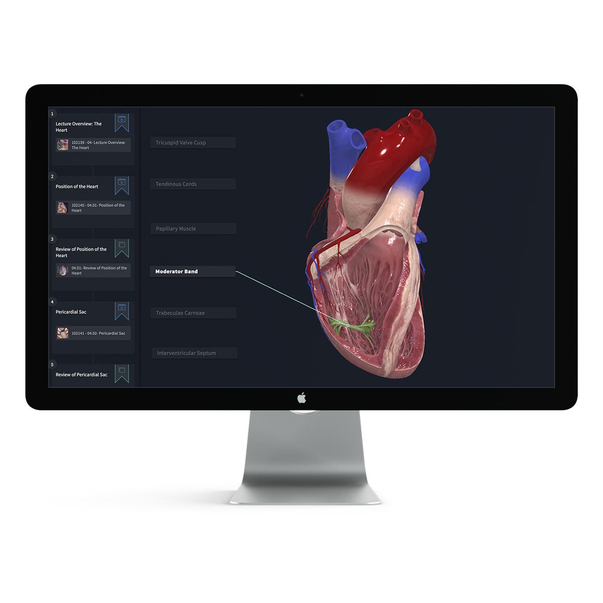 Complete Anatomy Educator kostenlose DEMO Version für