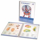 3B NEUROtables™ Deutsch, 1002492 [S0090], 3B Anatomie Software 2D