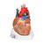 VD253: Herz, 7-teilig 1