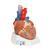 VD253: Herz, 7-teilig 2