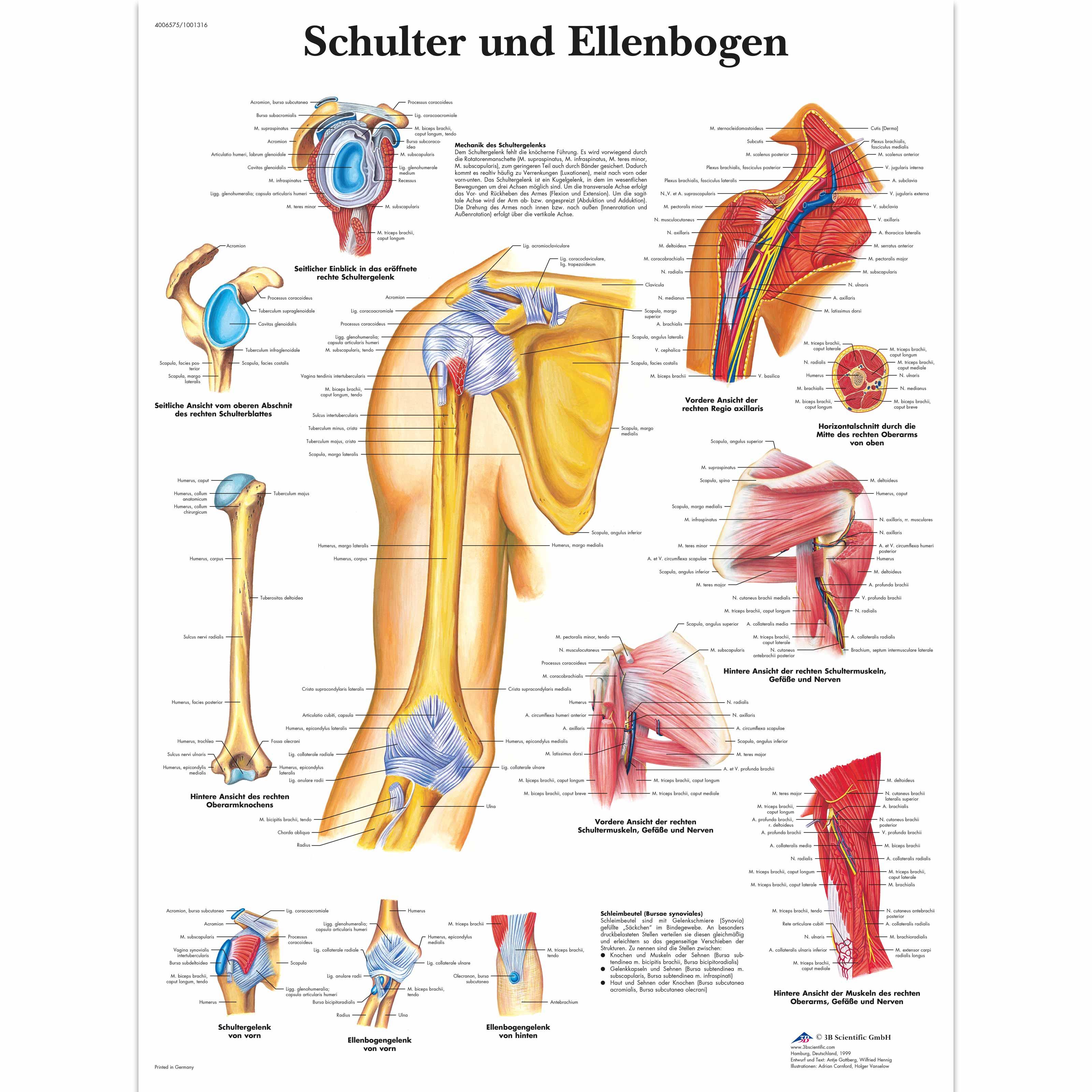 Nett Schulter Anatomie Knochen Zeitgenössisch - Menschliche Anatomie ...