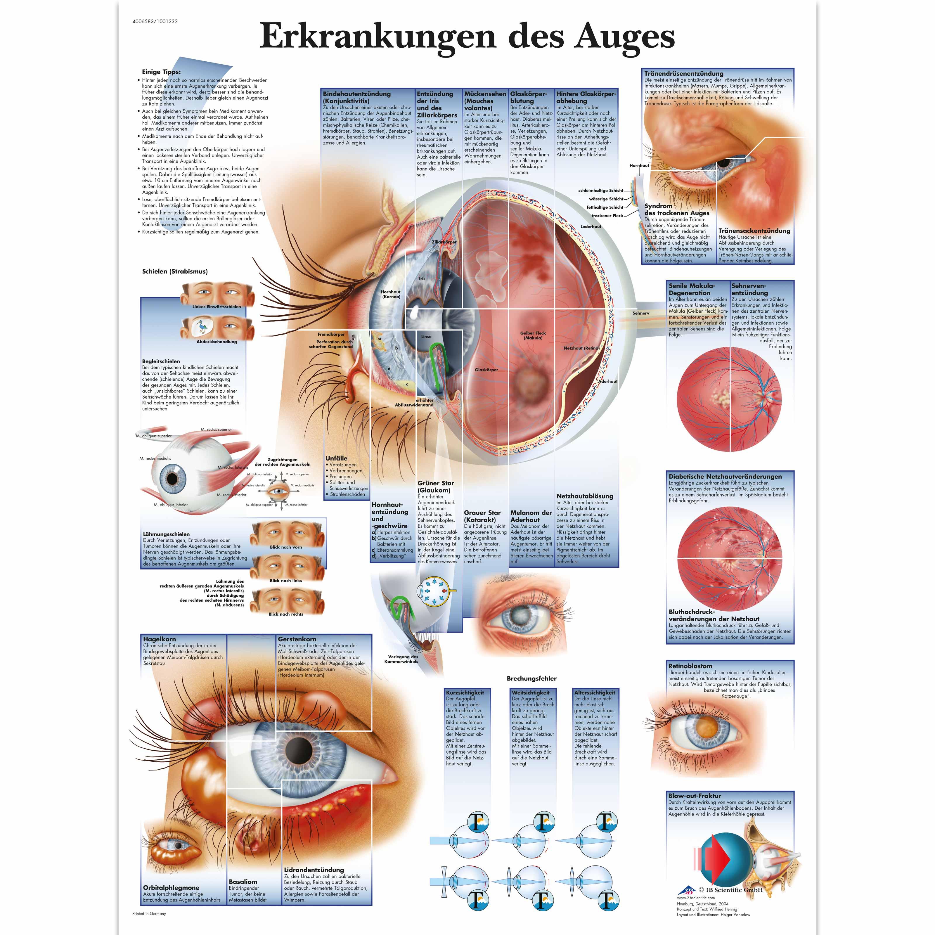 Großartig Anatomie Und Physiologie Des Auges Ideen - Anatomie Von ...