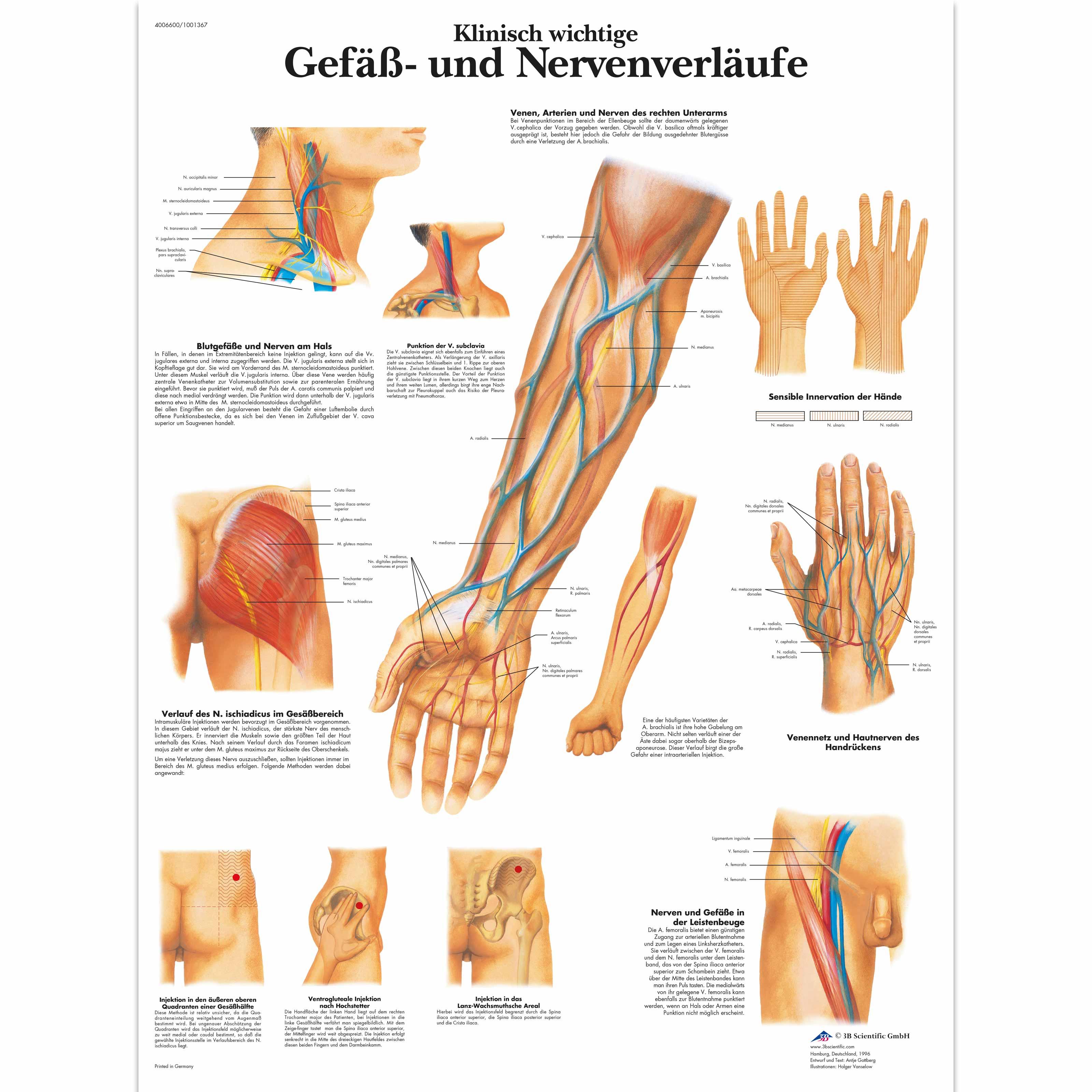 Lehrtafel - Klinisch wichtige Gefäß- und Nervenverläufe - 1001367 ...