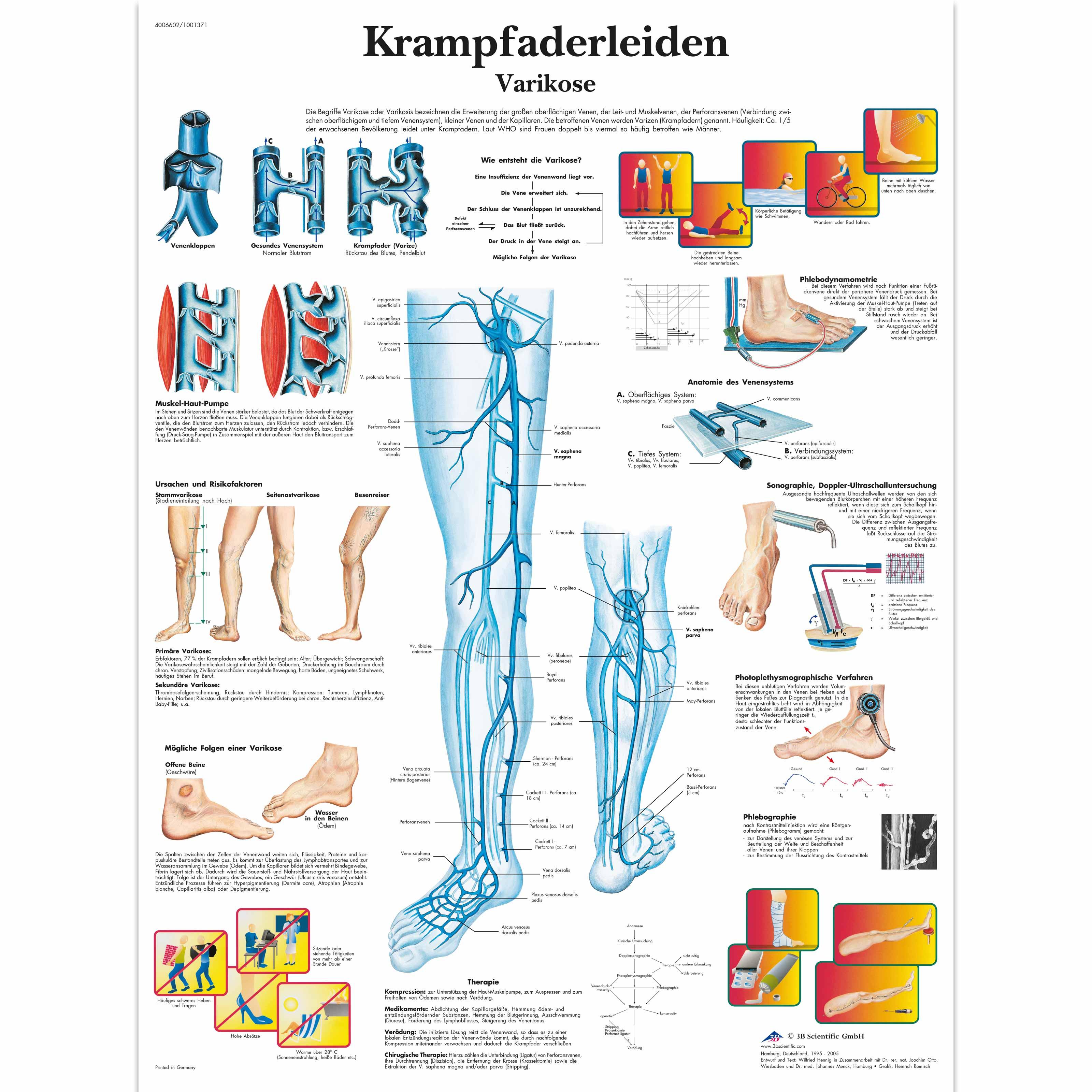 Ausgezeichnet Anatomie Des Venensystems Ideen - Anatomie Von ...