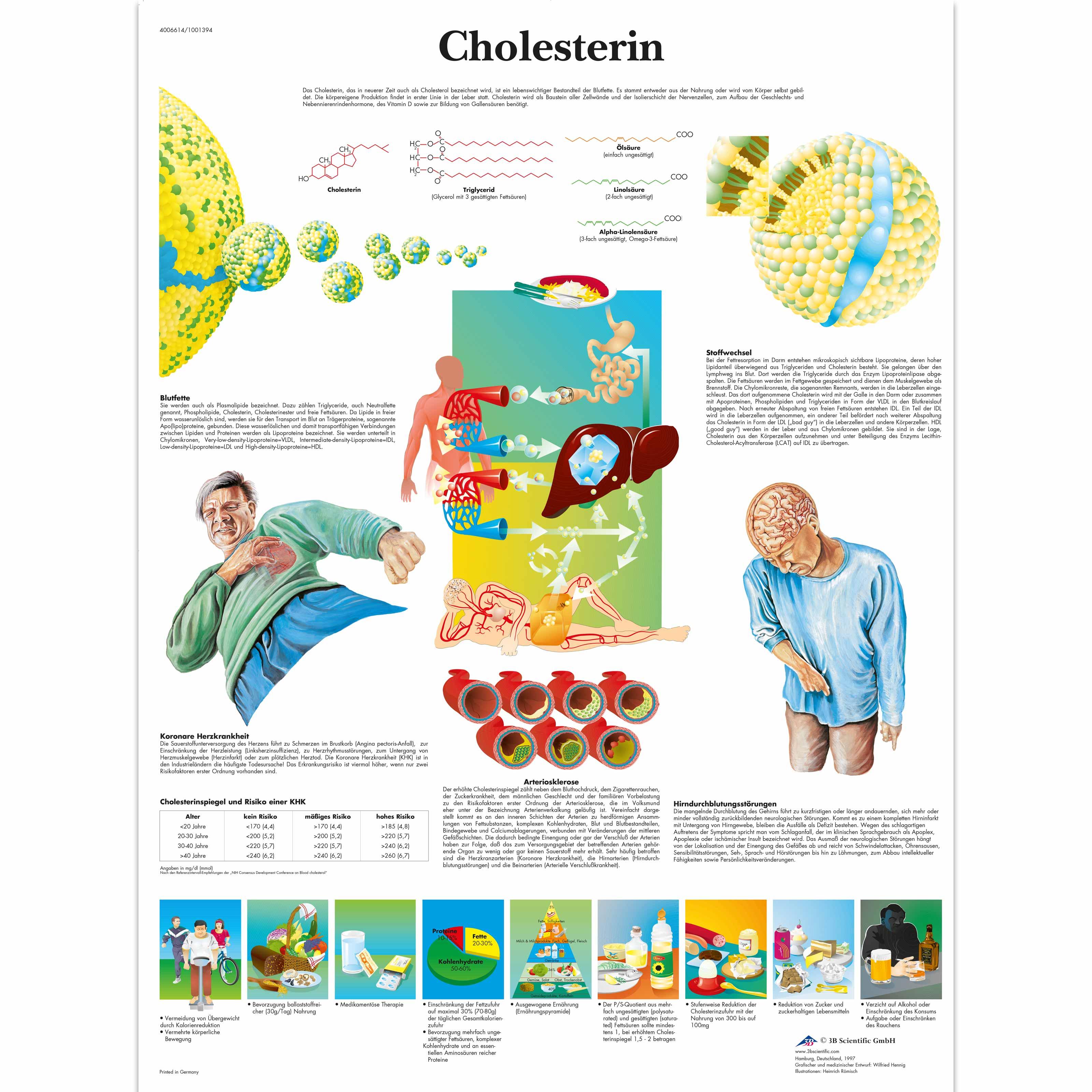 Lehrtafel cholesterin
