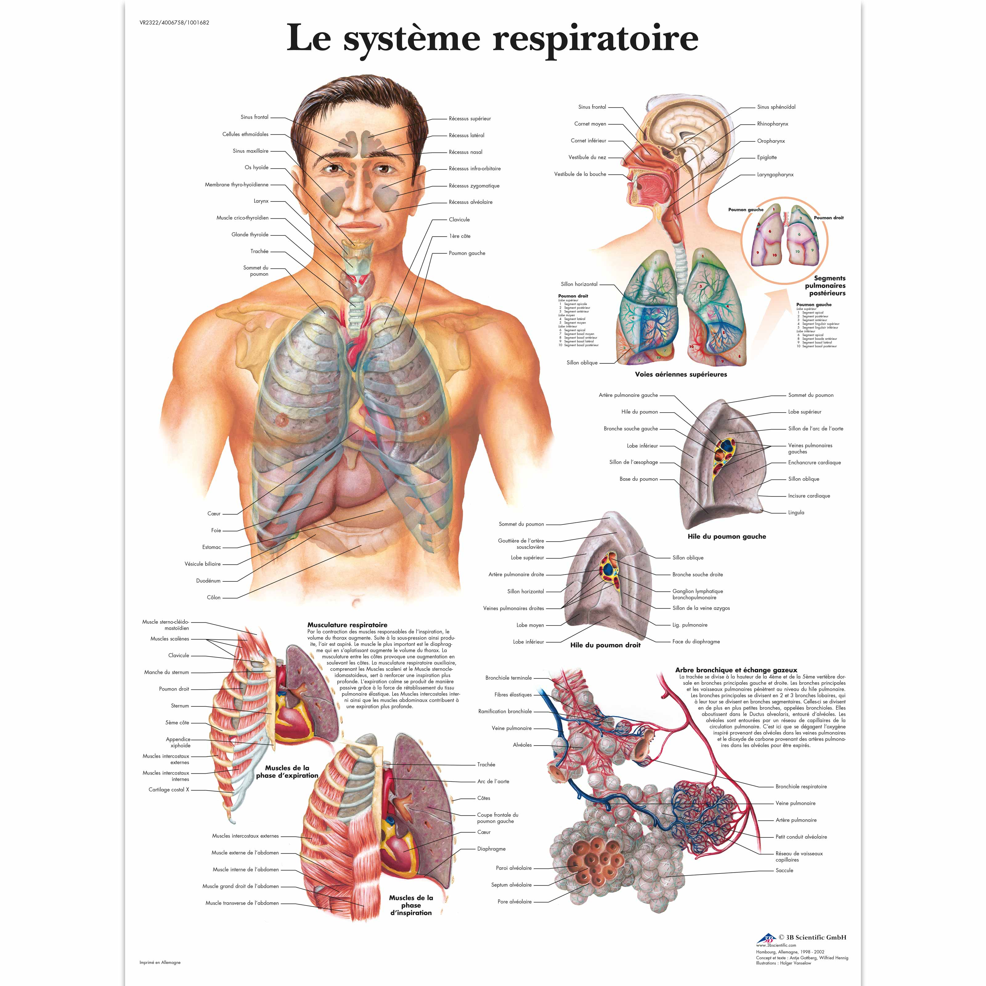 Lehrtafel - Le système respiratoire - 1001682 - VR2322L ...