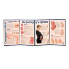 W43151: Conception to Birth - The Journey of a Lifetime Folding Display